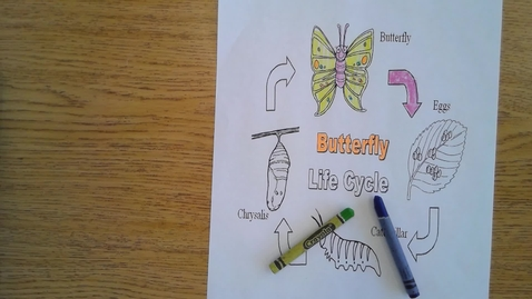 Thumbnail for entry Tuesday Butterfly Life Cycle