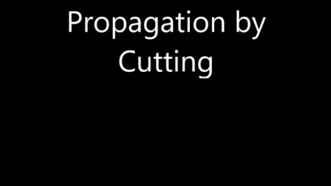 Thumbnail for entry propagation