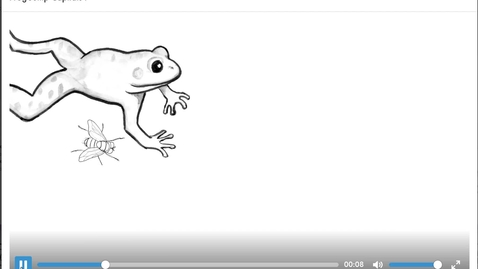Thumbnail for entry Frog Jump Capital F