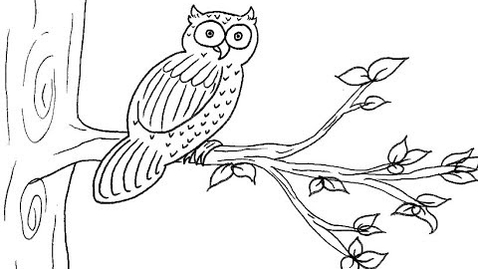 Thumbnail for entry How To Draw An Owl