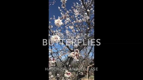 Thumbnail for entry Butterflies Final.mp4