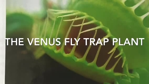Thumbnail for entry Let's Learn About the Venus Fly Trap!!