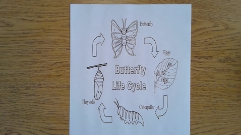Thumbnail for entry Monday Butterfly Life Cycle