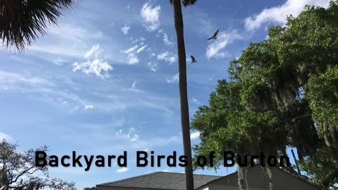 Thumbnail for entry Burton 4-H Center - The Backyard Birds of Burton 4-H Center - Tuesdays on Tybee