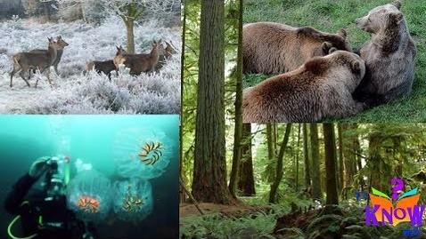 Thumbnail for entry Different Animal Habitats (where animals live) - HD footage for Kids