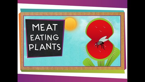 Thumbnail for entry Meat-Eating Plants