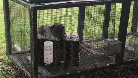 Thumbnail for entry My Rabbits