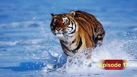 Thumbnail for entry Tiger TV Broadcast 17  Dec. 9, 2013