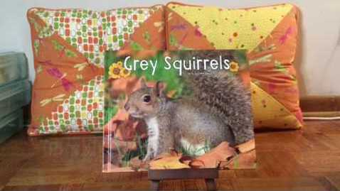 Thumbnail for entry Grey Squirrels