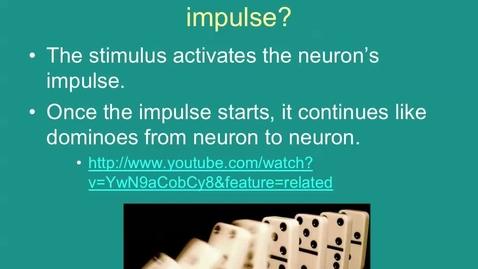Thumbnail for entry Nervous System: Impulse Transmission