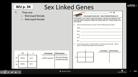 Thumbnail for entry Genetics Review/Pedigree Project