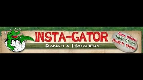 Thumbnail for entry Alligator Farm Field Trip