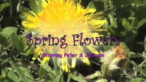 Thumbnail for entry Spring Flowers
