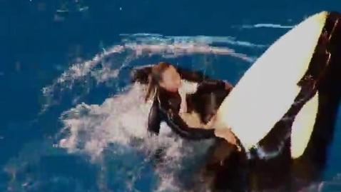 Thumbnail for entry Seaworld- Van Hook