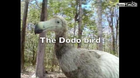 Thumbnail for entry The Dodo