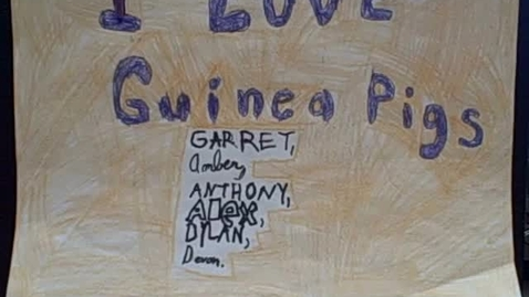 Thumbnail for entry I Love Guinea Pigs #3