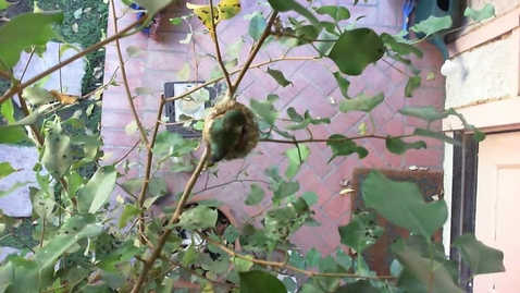 Thumbnail for entry 2012-4-7 Mom on new eggs