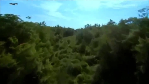 Thumbnail for entry Mariposas Monarcas