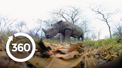 Thumbnail for entry Rescuing Rhinos | Racing Extinction (360 Video)