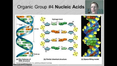 Thumbnail for entry Introduction to Nucleic Acids