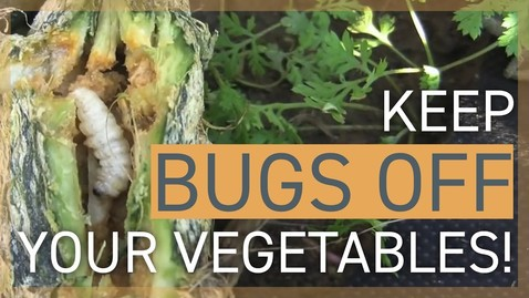 Thumbnail for entry Keep Bugs Off My Vegetables! How to Deal With Insects in the Garden