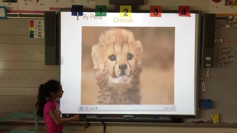 Thumbnail for entry Perla Sanchez-Chavez Cheetah research project