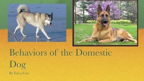 Thumbnail for entry Dog Behavior