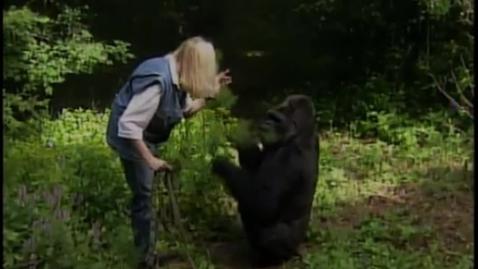 Thumbnail for entry Koko The Talking Gorilla Kendall A