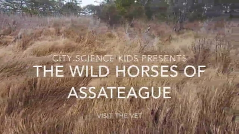 Thumbnail for entry City Science Kids Presents: The Wild Horses of Assateague Visit the Vet