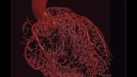 Thumbnail for entry Blood Vessels part 1