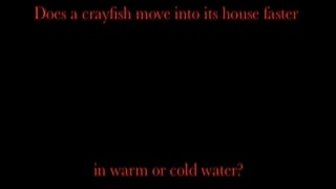 Thumbnail for entry Limesand Crayfish #3 Movie