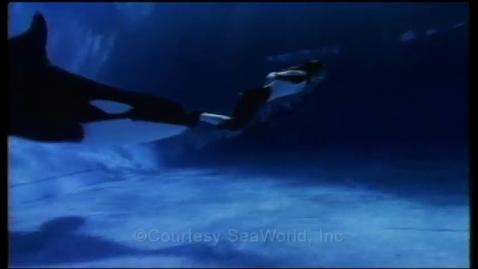 Thumbnail for entry sea world promo