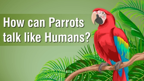 Thumbnail for entry How can Parrots talk like Humans?   Science Curiosity   Letstute