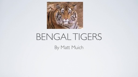 Thumbnail for entry Bengal Tiger