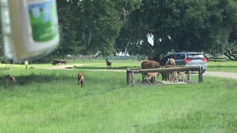 Thumbnail for entry Wild Florida Safari 8