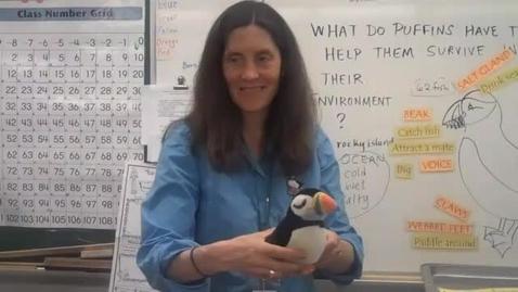 Thumbnail for entry Seabird Sue