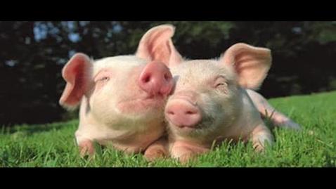 Thumbnail for entry Swine Flu PSA