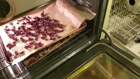 Thumbnail for entry 3/3 Drying Roselle