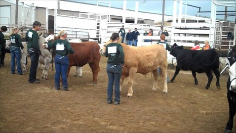 Thumbnail for entry 4 H Beef Showmanship
