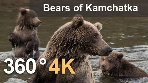 Thumbnail for entry 360°, Bears of Kamchatka. Kambalnaya River, 4K aerial video