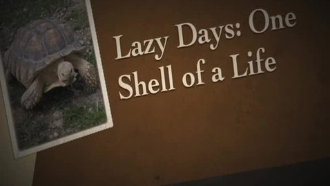 Thumbnail for entry Lazy Days: One Shell of a Life