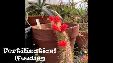 Thumbnail for entry Fertilization a