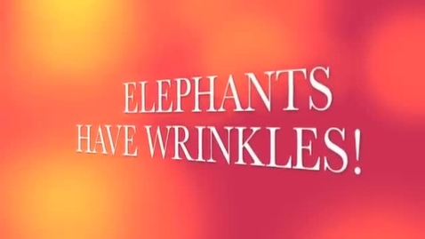 Thumbnail for entry Elephants Have Wrinkles