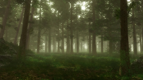 Thumbnail for entry Forest Sounds | Woodland Ambience, Bird Song, Nearby Village | 3 Hours
