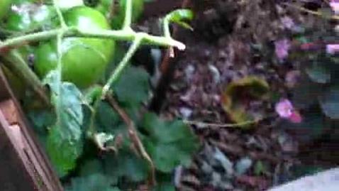 Thumbnail for entry Korean Gardens 19
