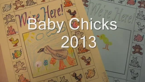 Thumbnail for entry Baby Chicks 2013