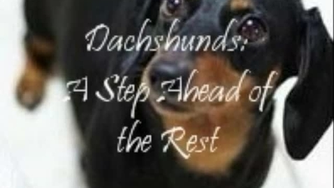 Thumbnail for entry Dachshund Nonfiction Article