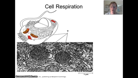 Thumbnail for entry Cell Respiration Video
