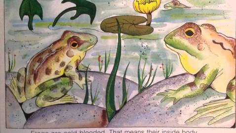 Thumbnail for entry Frogs by Gail Gibbons
