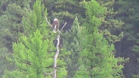 Thumbnail for entry Birding Montana